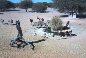 Gatdam Water hole seen thru live camera